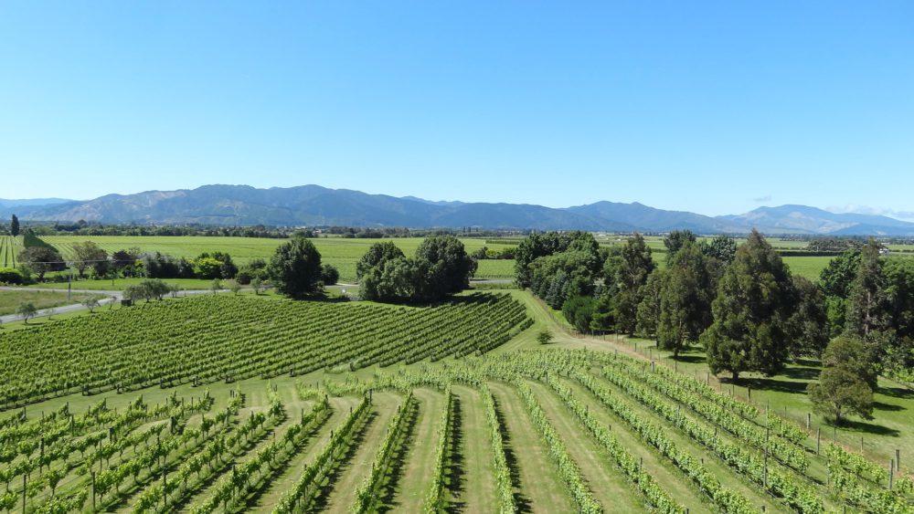 Nieuw Zeeland met kinderen: wijngebieden