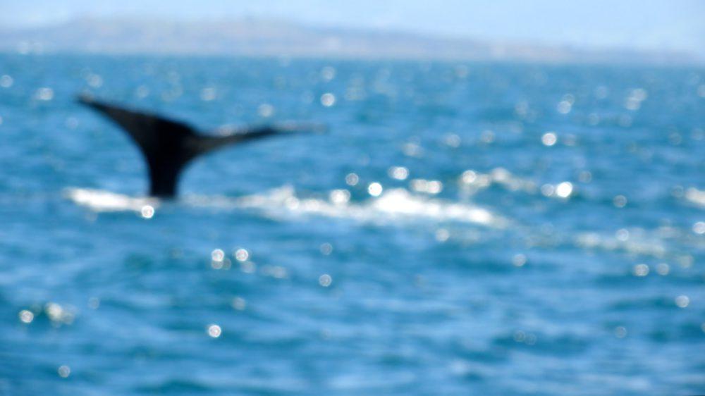 Nieuw Zeeland met kinderen: DE walvisstaart