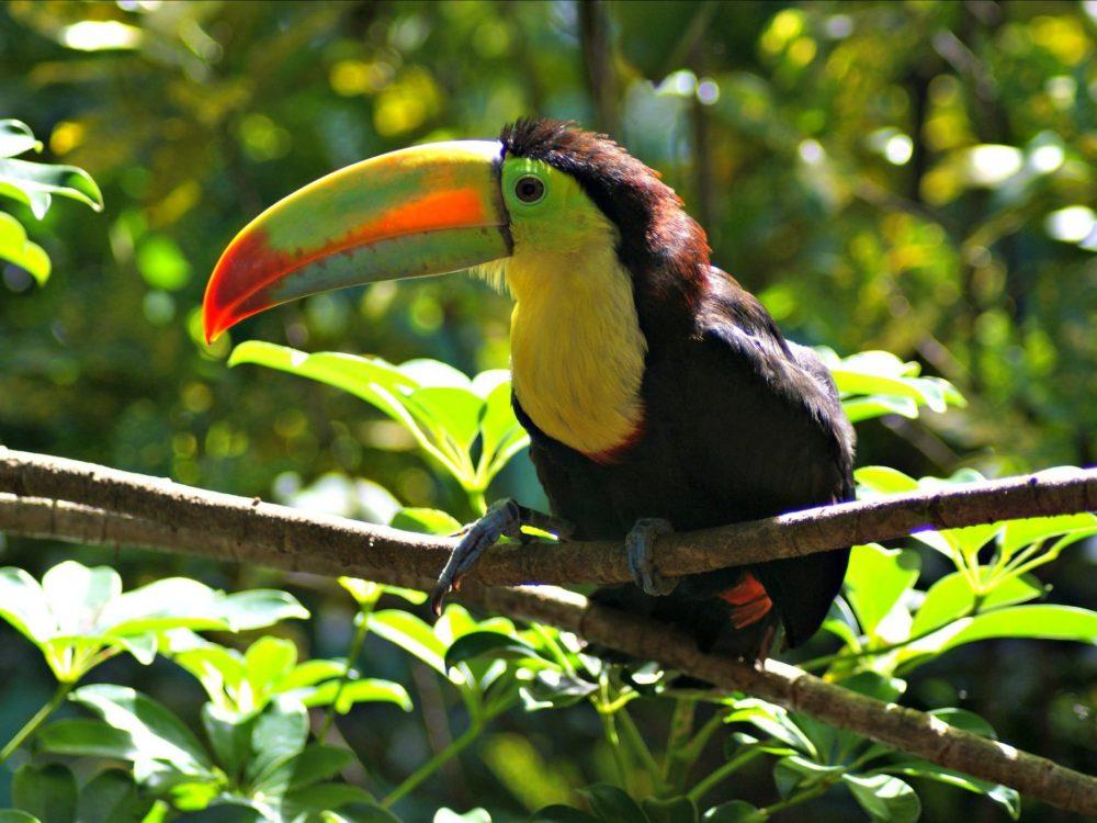 Kids Love Travel: Costa Rica with kids