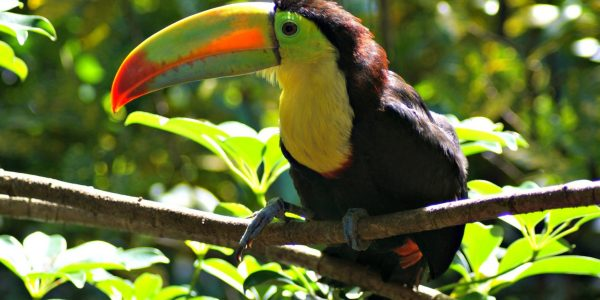 Kids Love Travel: Costa Rica with kids