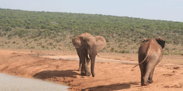 Kids Love Travel:: reis in Zuid Afrika