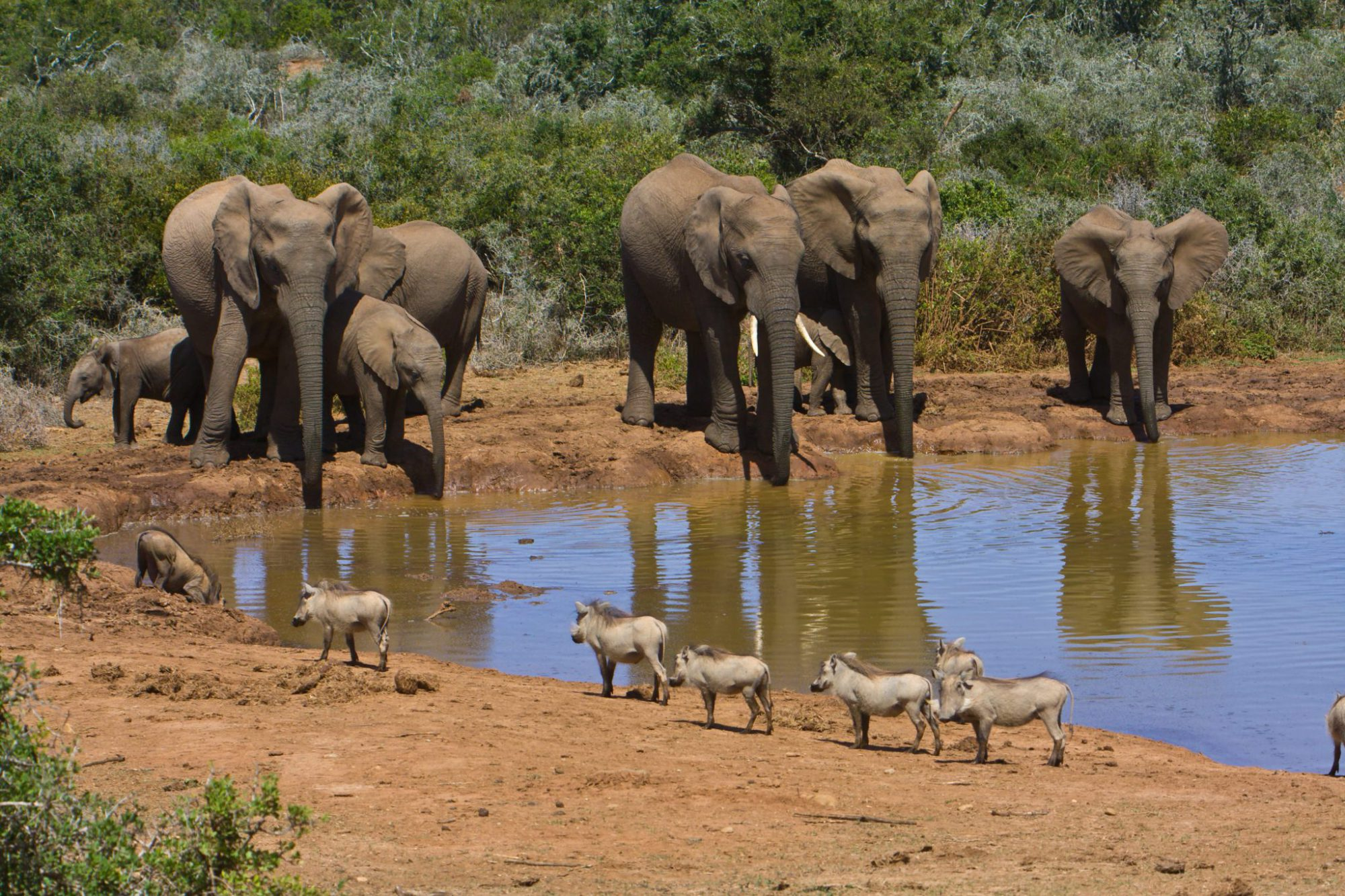 Kids Love Travel: Zuid Afrika