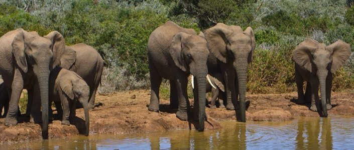 Kids Love Travel: South Africa with kids