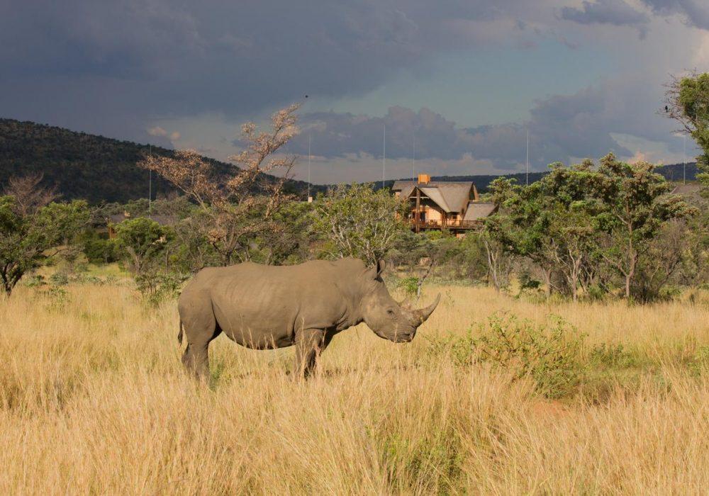 Kids Love Travel Kindvriendelijke hotels in Zuid-Afrika