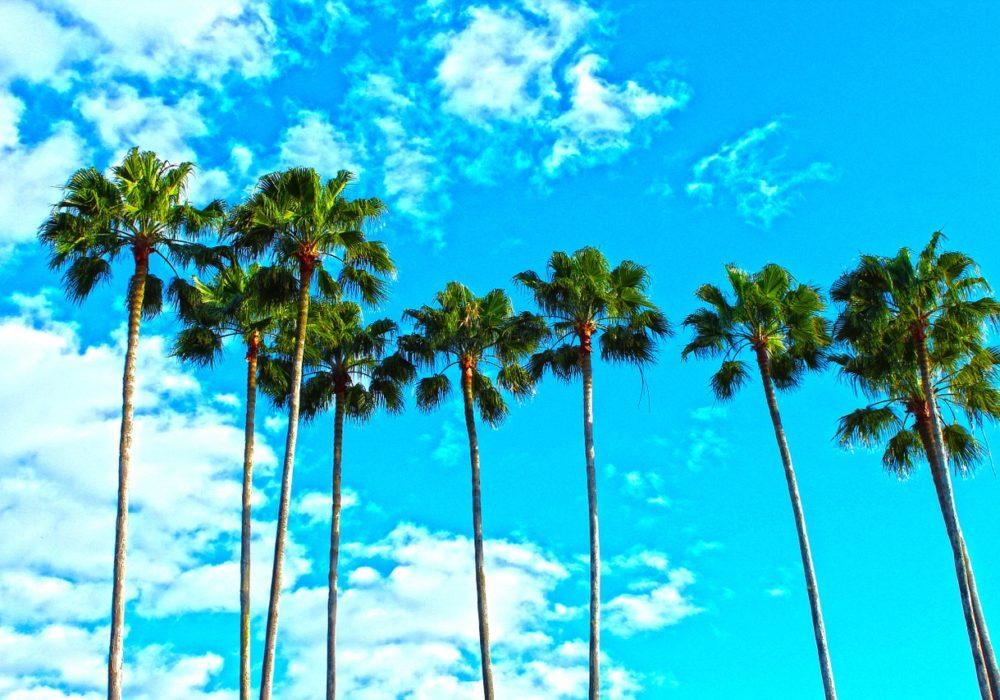 kindvriendelijke hotels Florida