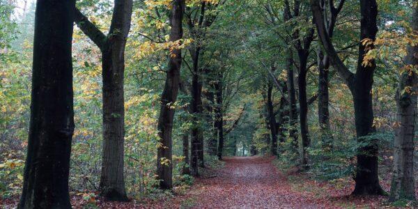 Kids Love Travel: bijzonder mooie natuur in Nederland en België